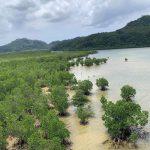 【2020月1月10日〜13日】冬の西表島でカマイ(イノシシ)と野草で島の伝統的な暮らしを体験 原点に還るアイランドワーク