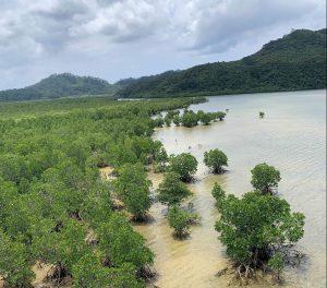 【2020月1月10日〜13日】冬の西表島でカマイ(イノシシ)体験 自然と共に生きるを知るアイランドワーク